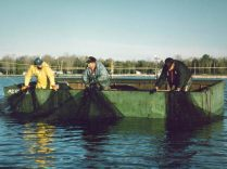 Richard Grabowski and crew catching smelt in their steel scow. Menominee, MI, 1990.